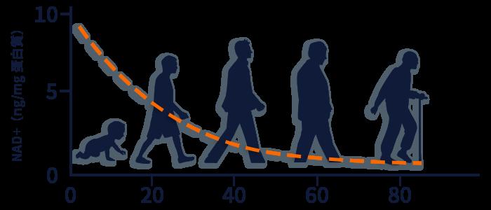 寿命と老化に影響する成分NAD